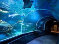 AquaDom Aquarium Berlin