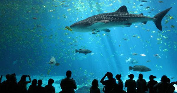 Biggest Aquarium in US