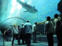 Biggest Aquarium in the world