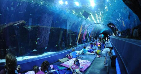 Kids Travel in Atlanta Aquarium