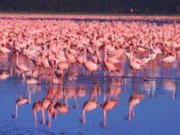 Beautiful Lake Nakuru Kenya