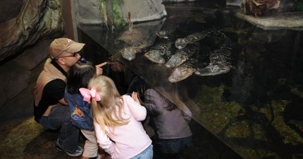 Pretty Good Aquarium in Atlanta Shell Fish