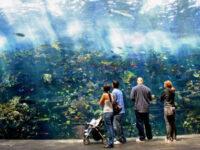 Pretty Good Georgia Aquarium
