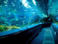Shanghai Ocean Most Popular Aquarium