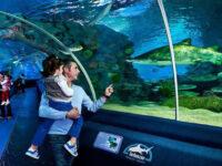 Turkuazoo Aquarium